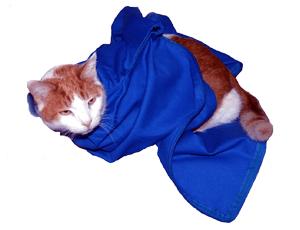 Cobalt EZ-Zip Carrier Cat