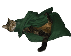 Green EZ-Zip Carrier Cat